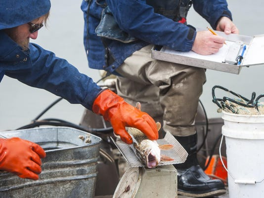 Pelican Point Pike Removal