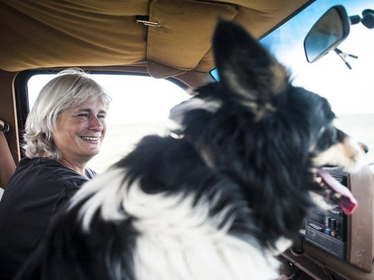 Joyce Heibertshausen takes her best sheepdog, Drift, to the pastures to look for ewes and their lambs. Drift is getting older and soon he will be retired. Finding a replacement sheepdog isn't simple as not every border collie is suited to the job.