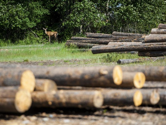 A deer warily looks past a lot of timber used to build log homes.
