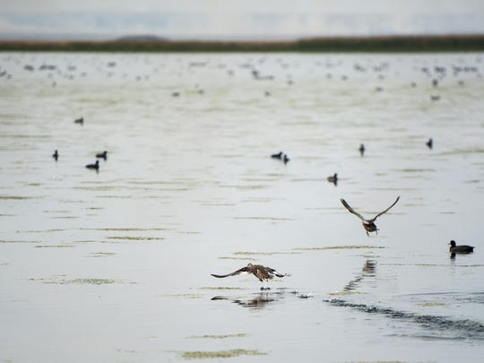 Waterfowl hunting at Benton Lake National Wildlife Refuge 12 miles north of Great Falls will be limited to a single 393-acre unit.