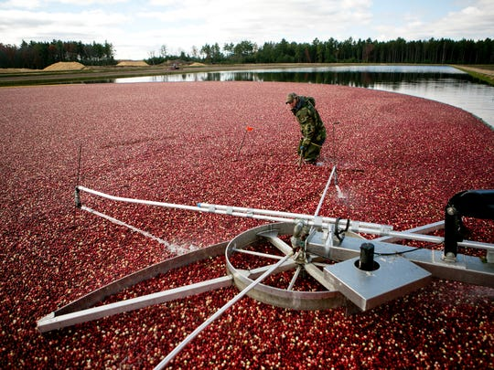 The U.S. Department of Agriculture has agreed to purchase up to $55 million in cranberry products.