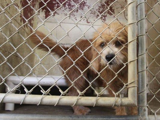 mar dog pound donation 4.jpg