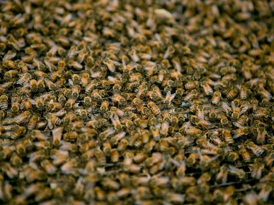 CWS Beekeeping 02.JPG