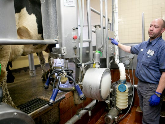 Milk technician Dale Lanjahr watches Tuesday as cows exit the milking parlor at Weber's Farm in Marshfield.