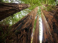 How to hike the redwoods for free this Saturday in Monterey and Santa Cruz counties