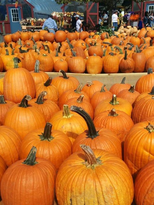 Ingle farm pumpkins.jpg