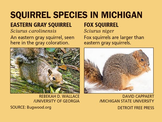 Squirrel species in Michigan