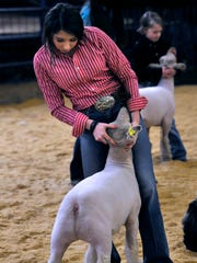 Jim Ned High School junior Talyn Eaton steadies her lamb during judging Thursday at the Taylor County Livestock Show. Talyn won several awards during the show.