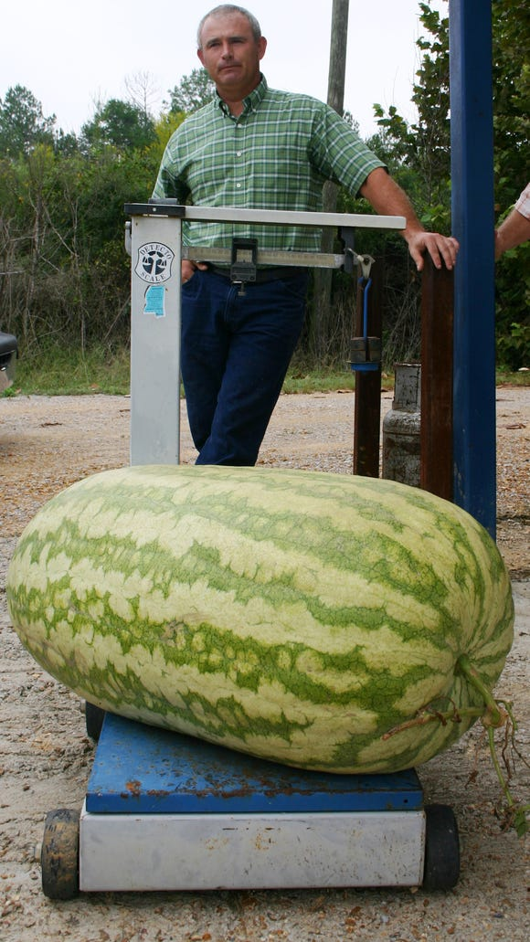 Jerry Vaughn Jr. of Water Valley and his record-setting whopper watermelon are shown in this file photo.