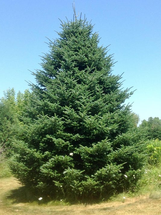 - Oconto Farm To Provide Christmas Tree To White House