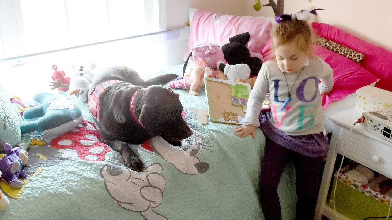Trained to detect seizures, Hazel's greatest gift is one of love. She is friend to 5-year-old Lucy Rhoden and member of their family.