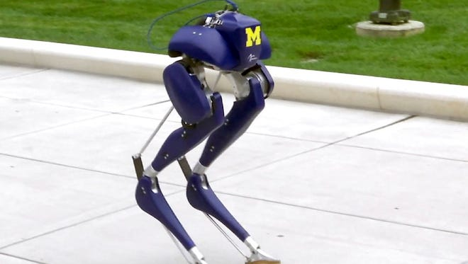 "A new robot, named ""Cassie,"" walks on the campus of the University of Michigan in Ann Arbor on Oct. 23. Researchers say the two-legged, bird-like machine, which is capable of walking unassisted on rough and uneven terrain, could someday have applications for search-and-rescue efforts."