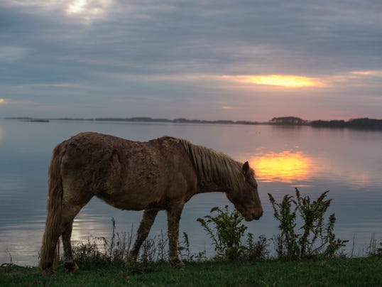 -SBYTab_05-23-2014_Beachcomber_1_T062~~2014~05~21~IMG_-le-_Assateague_in_A_1.jpg
