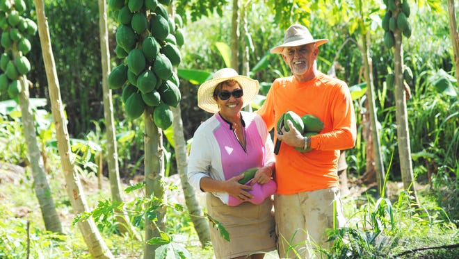 Mike and Jovi Ady in their papaya grove. They have dozens of trees in four varieties.
