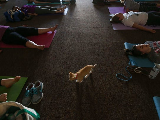 Cat Yoga In Des Moines You Re Kitten Me