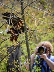 -MNJBrd_04-28-2013_NewsJournal_1_A003~~2013~04~27~IMG_-Mohican_Wildlife_1_1_.jpg