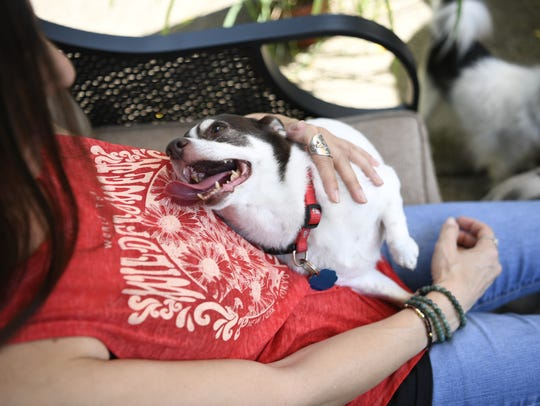 Rocky, 9, a chihuaha mix, looks up at Leanna De Sheplo
