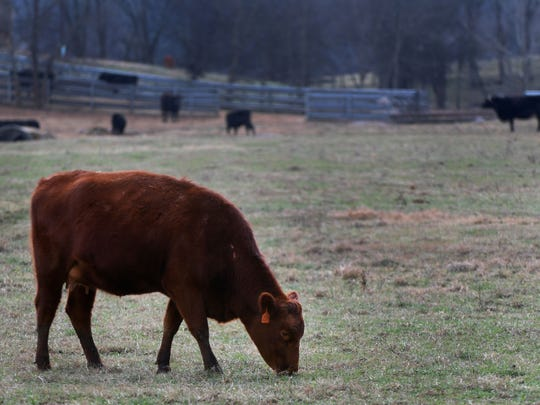 U.S. beef production is expected to increase 3.3 percent in 2019.
