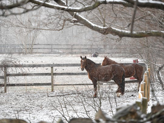 Horses stand under a tree as the snow storm begins