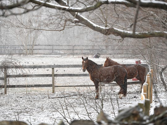 Horses stand under a tree as the snow storm begins to hit Mahwah, NJ and the rest of North Jersey on Wednesday afternoon, March 21, 2018.
