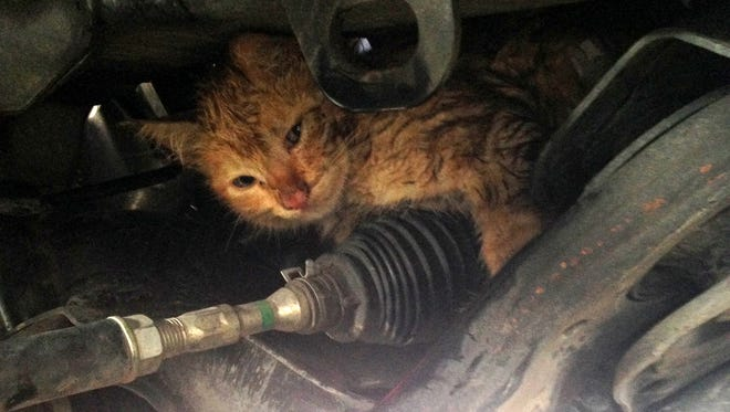 A kitten found several hiding spots like this one before Ventura firefighters finally got the feline to safety on Saturday afternoon.
