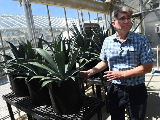 Biochemistry Professor John Cushman talks about the benefits of Agave plants at University of Nevada's College of Agriculture greenhouse complex in Reno on Aug. 5, 2015.