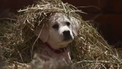Budweiser's Super Bowl commercial features a lost puppy
