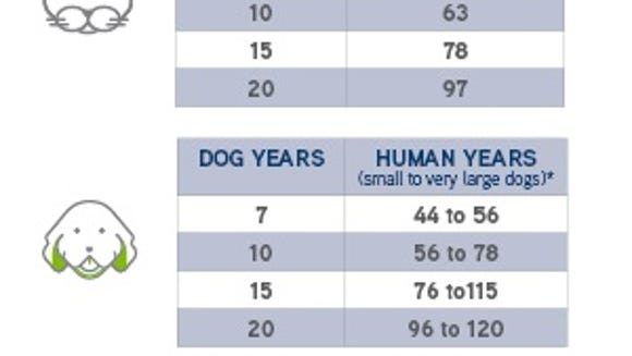 Dogs and Cats in human years