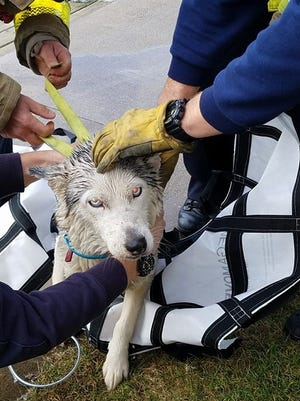 Port Huron firefighters rescued this dog from under a dock on the Black River.