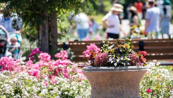 The Rudolf W. van der Goot Rose Garden at Colonial Park will host the 42nd annual Rose Day on Saturday, June 10.