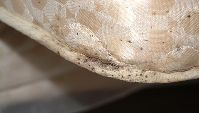 Bed Bugs Disappeared For 40 Years Now They Re Back Here S What To Know