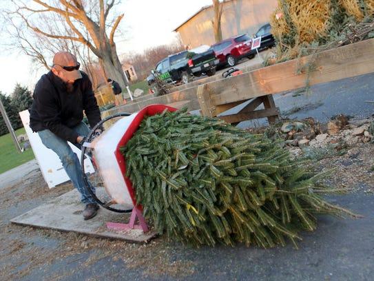 Scott Schuett of Schuett Farms nets a Christmas tree