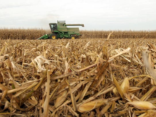 Kevin Kroh harvests corn on a farm in Wheatland on