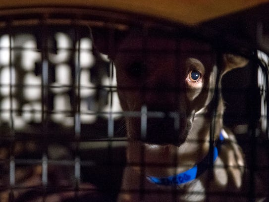 Jacob waits in his kennel on the tarmac at the Indianapolis