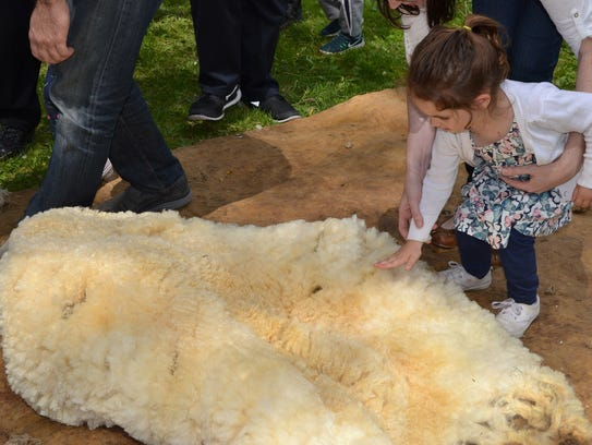 A visitor feeling a sheep skin as part of the 2016