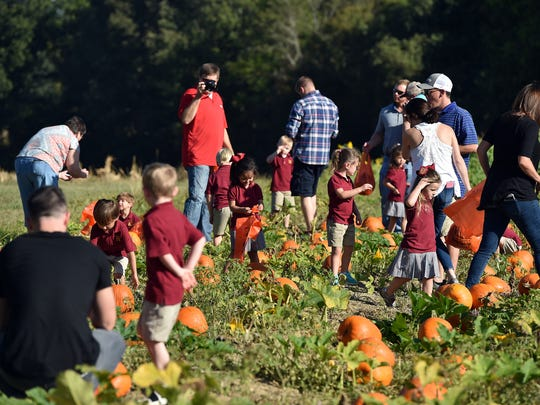 Hartfield K4 students and parents hunt for the perfect pumpkin.