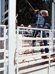 Steve Coleman prepares to send another cowboy and animal