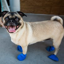 Fulton Homes to give away free booties at PetSmart to protect pups from scorching concrete