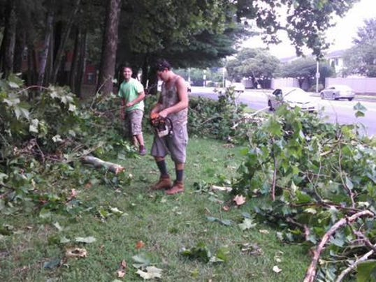 Beaglin PArk storm debris