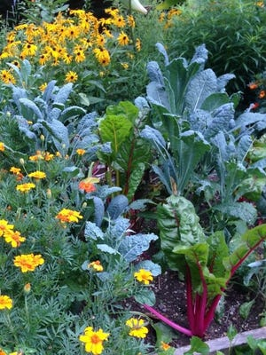 Kale and marigolds in a raised bed.