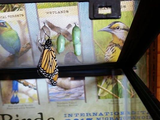 dunes monarch