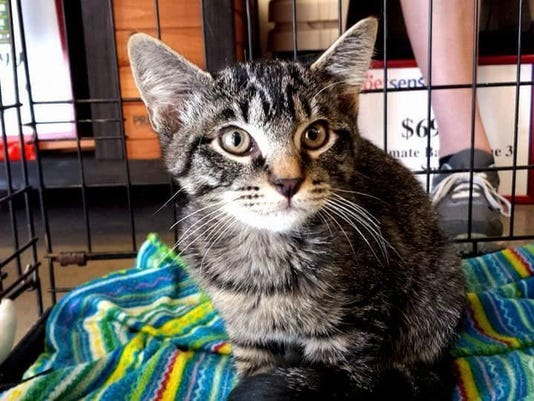 Cedar City Pet adoption-photo-4