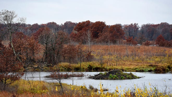 A classroom building overlooks a pond with a large beaver lodge at the Sherburne National Wildlife Refuge.