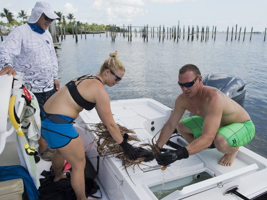 """We got seven today which wasn't bad for not scouting and only doing one dive,"" said Joshua Hileman (right) of Jensen Beach, who displays the lobsters he caught with his wife, Erica (center) and father, Paul (back left) Wednesday on the opening day of lobster mini-season at the Jensen Beach Boat Ramp in Jensen Beach. 