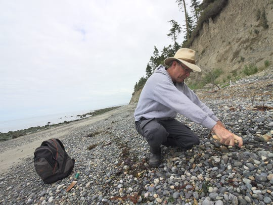 Tim Blair rakes a rock bed on Glass Beach as he looks