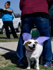 Kista, a 3-year-old mixed breed, stands between the feet of her owner Sharon Walton. She was sporting fairy wings Saturday for the Krewe of Barkus Mardi Gras dog parade at Camp Barkley.