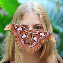 An Attacus Atlas butterfly rests on a visitor's face at the Botanical Garden at Masaryk University in Brno, Czech Republic.