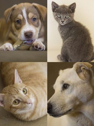 Pet of the week. Adopt your new lifelong friend now!
