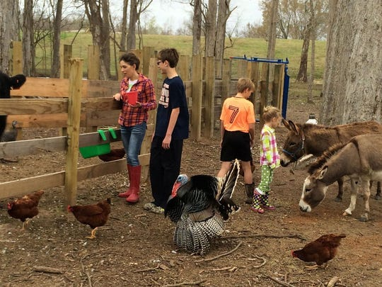 Jenny Peterman (left) and her children (from left) Gabe, Abel and Lyza feed the animals on the farm in Latanier owned by her and her husband, Taten.