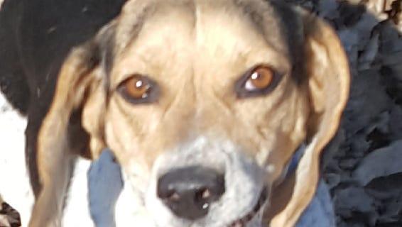 Oshkosh Northwestern Pet of the Week Abby seeks a forever home.
